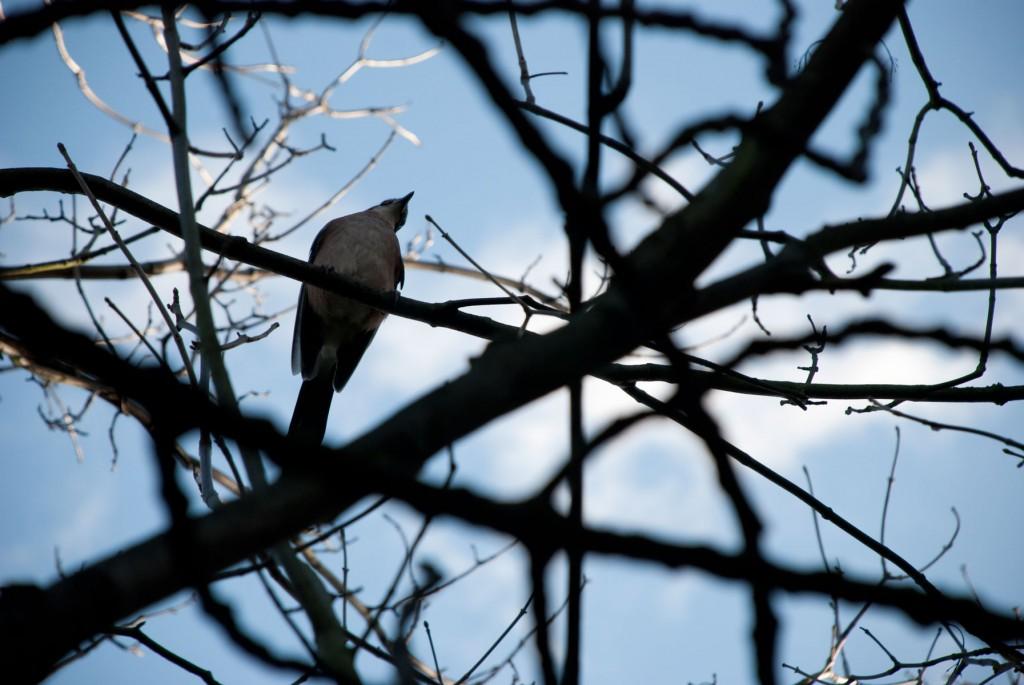bird_1
