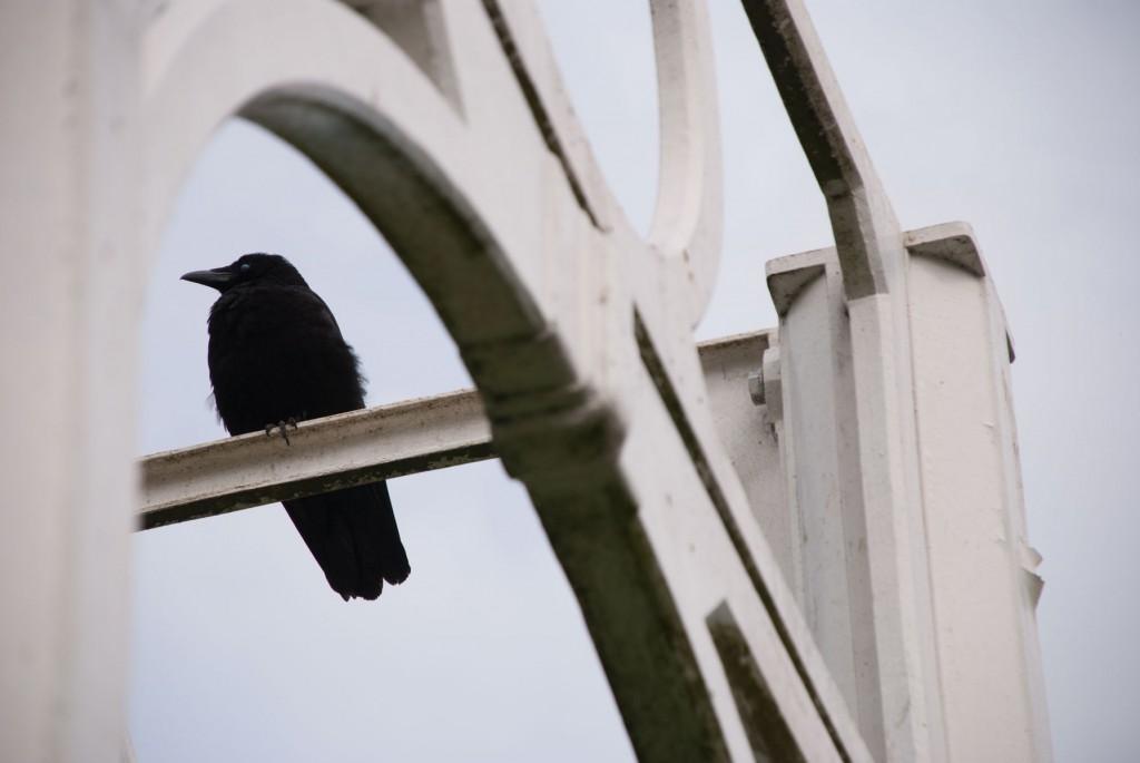 bird_corner_detail_v2