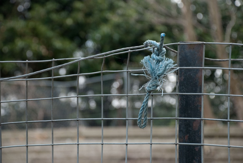 blue_knot
