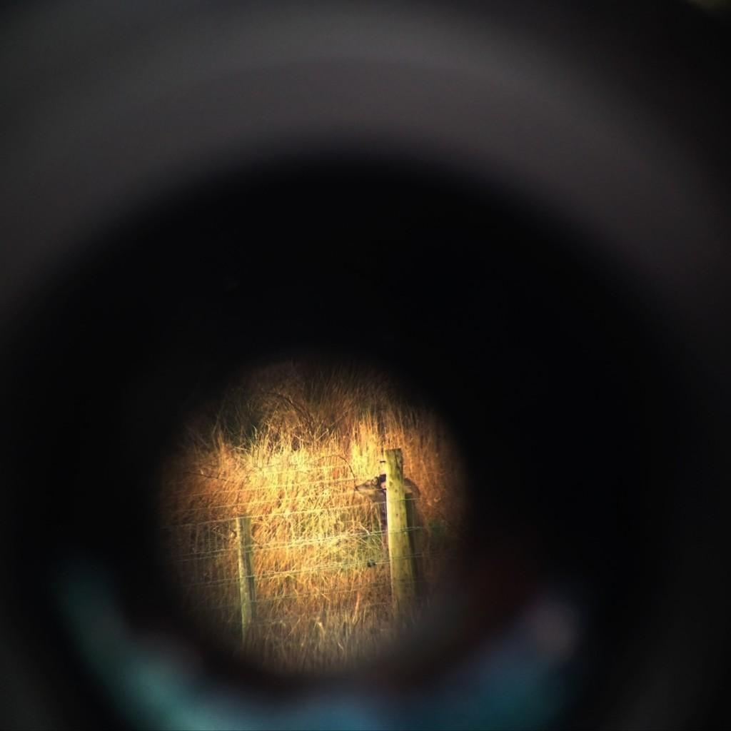 deer_telescope_2_web